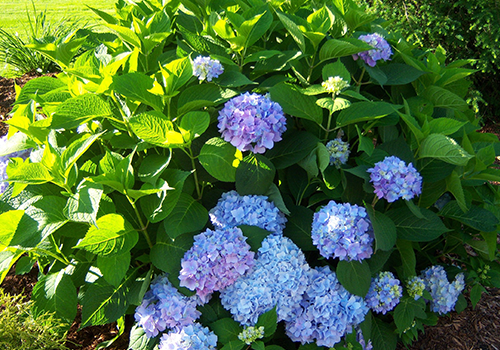 Sharon MA top landscaping companies for landscape maintenance