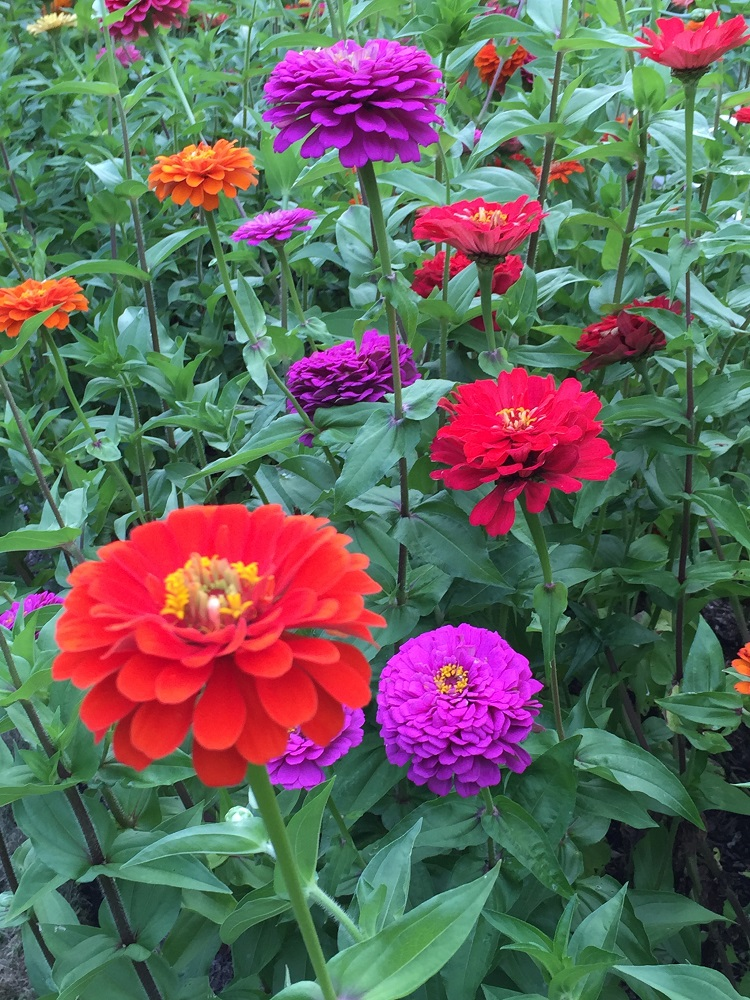 Flowers care and landscape maintenance in Sudbury MA