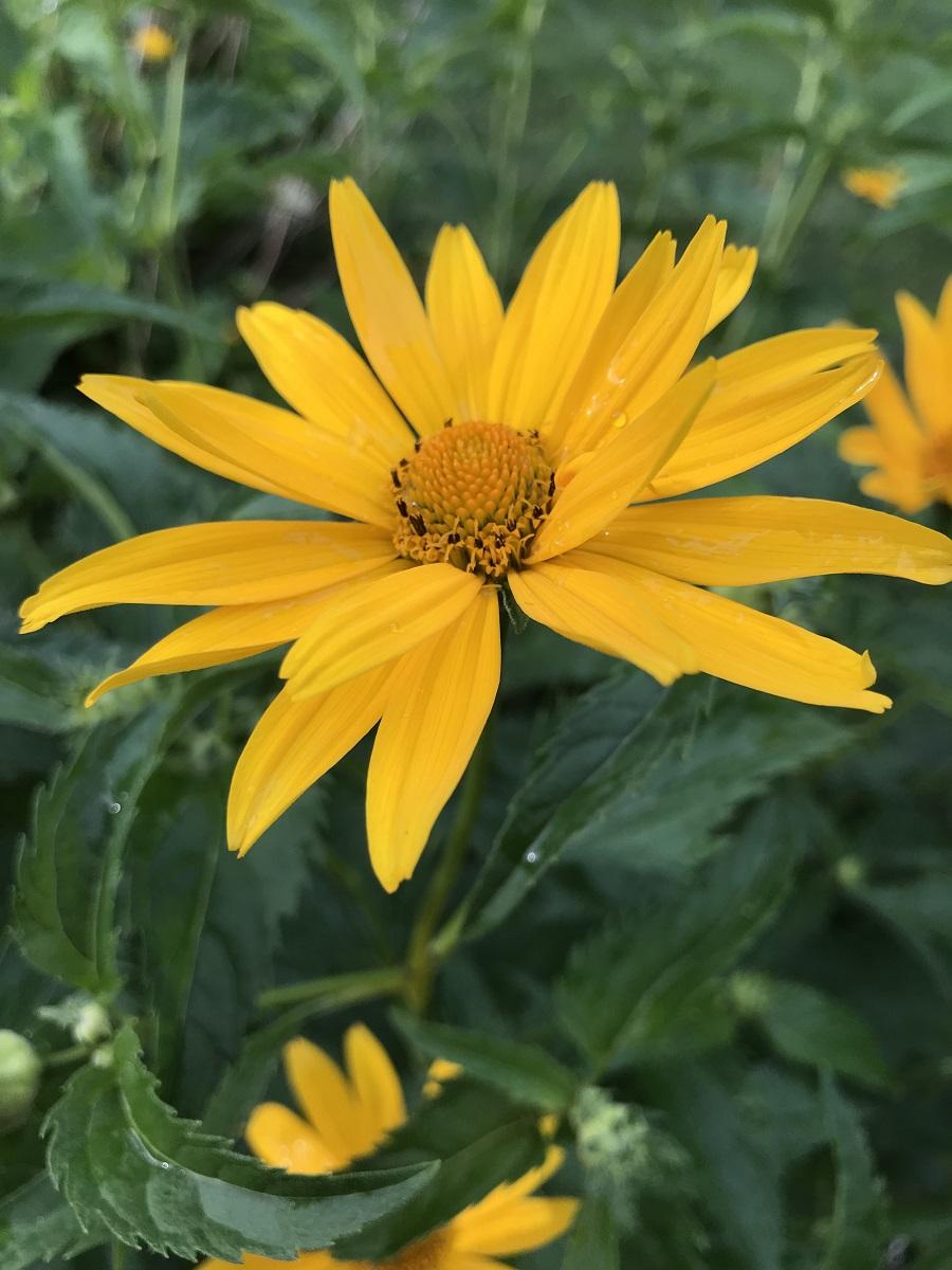 Landscape maintenance in Weston MA for flowers