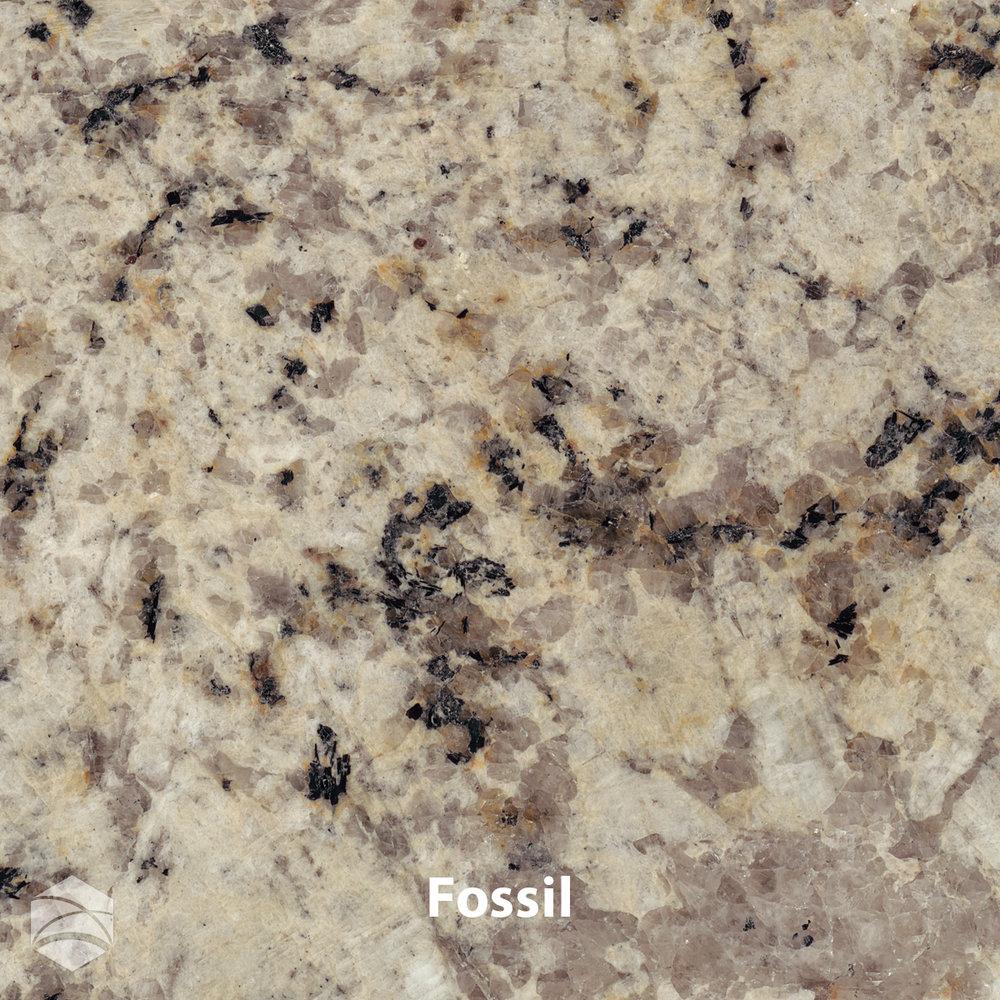 Fossil_V2_12x12.jpg