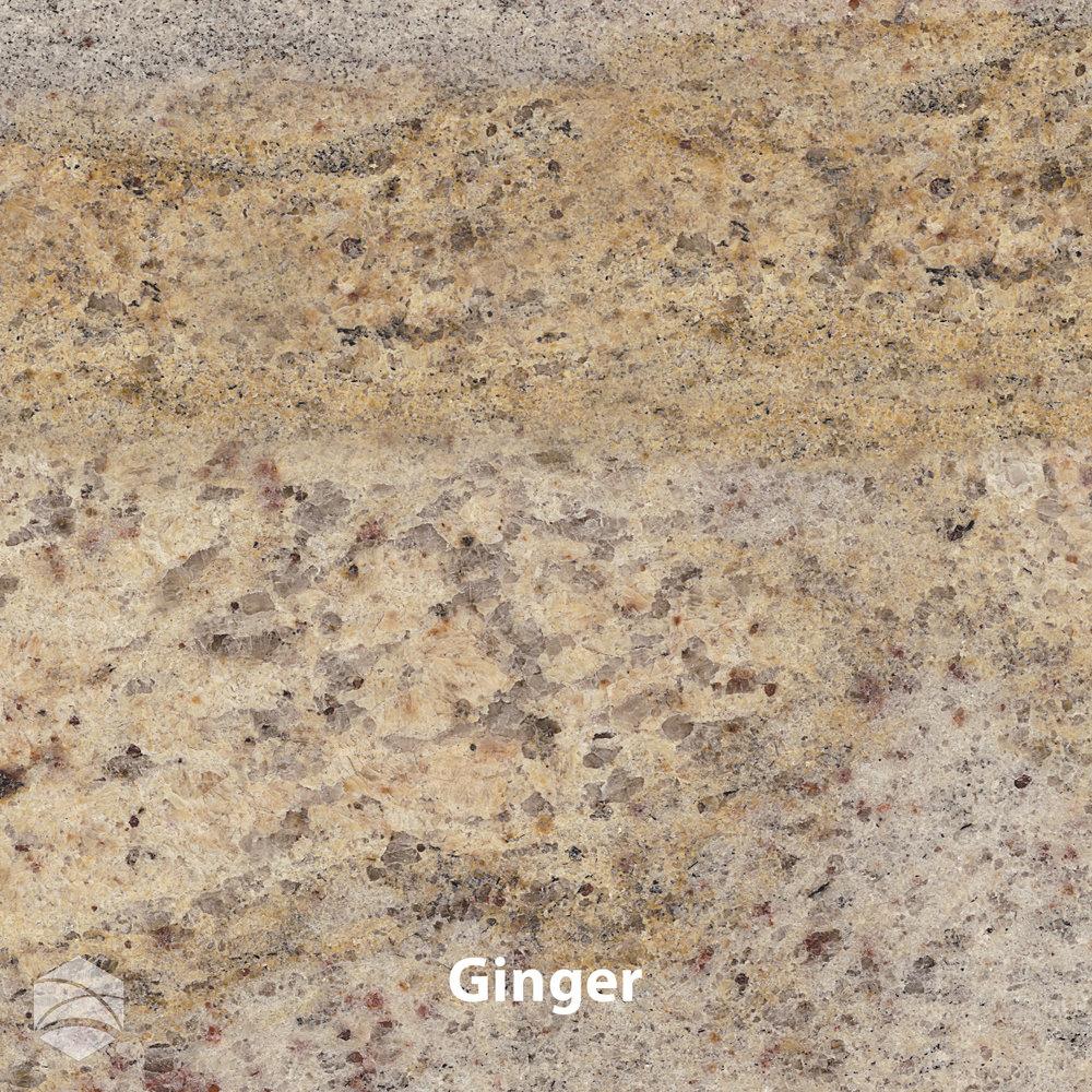 Ginger_V2_12x12.jpg