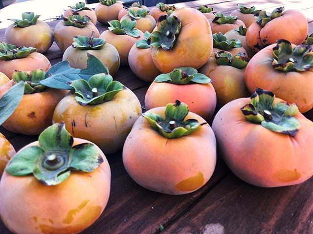 Harvested our persimmons this weekend, I'm a farmer IRL now 👩🏼🌾.
