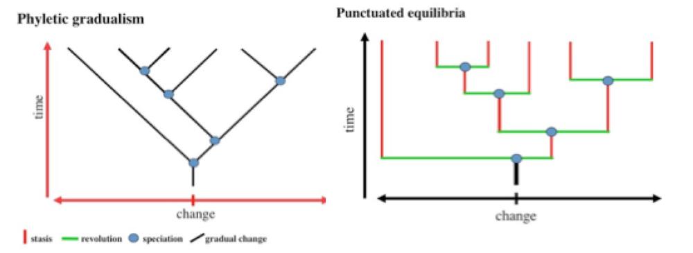 Gradual or Punctuated Equilibrium