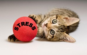This kitten turns stress into a game!