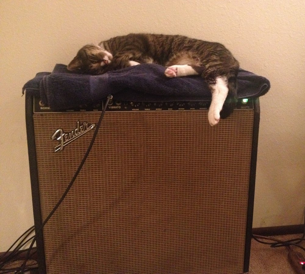 My trusty 1964 Super Reverb  and my trusty assistant, Melvin.