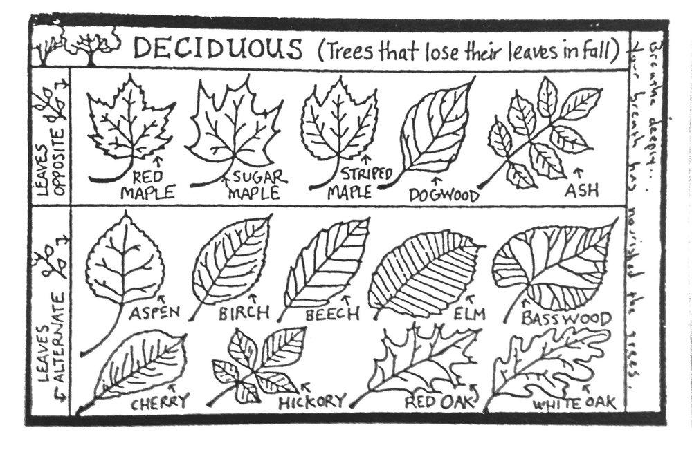 deciduous-leaves.jpg