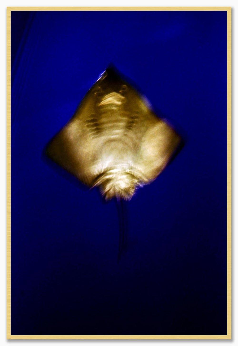 U5_NoMat_Gold.jpg