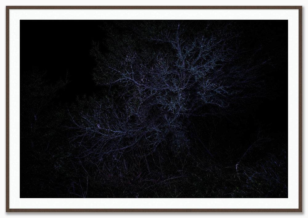 Constellations_Mat_Walnut.jpg
