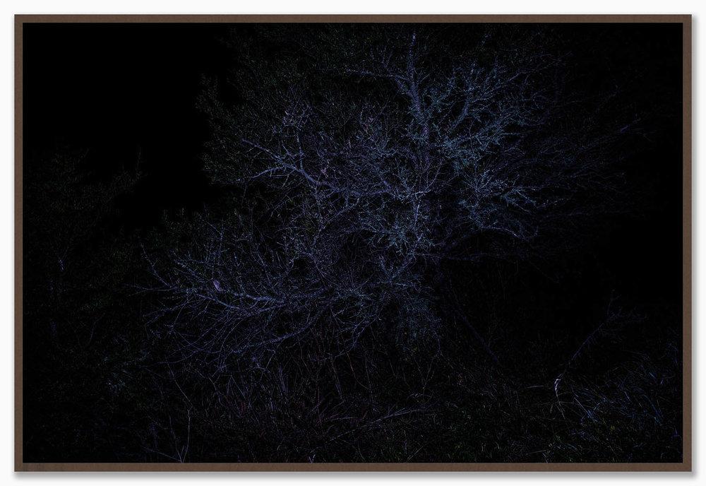 Constellations_NoMat_Walnut.jpg
