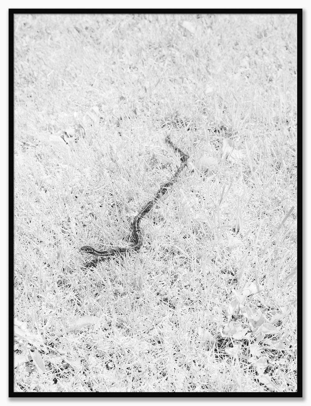 Snake_NoMat_MatteBlack.jpg
