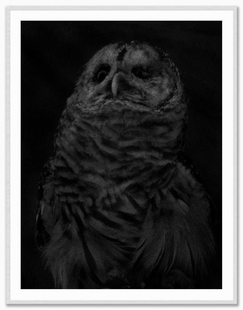 Owl_Mat_FrostedSilver.jpg