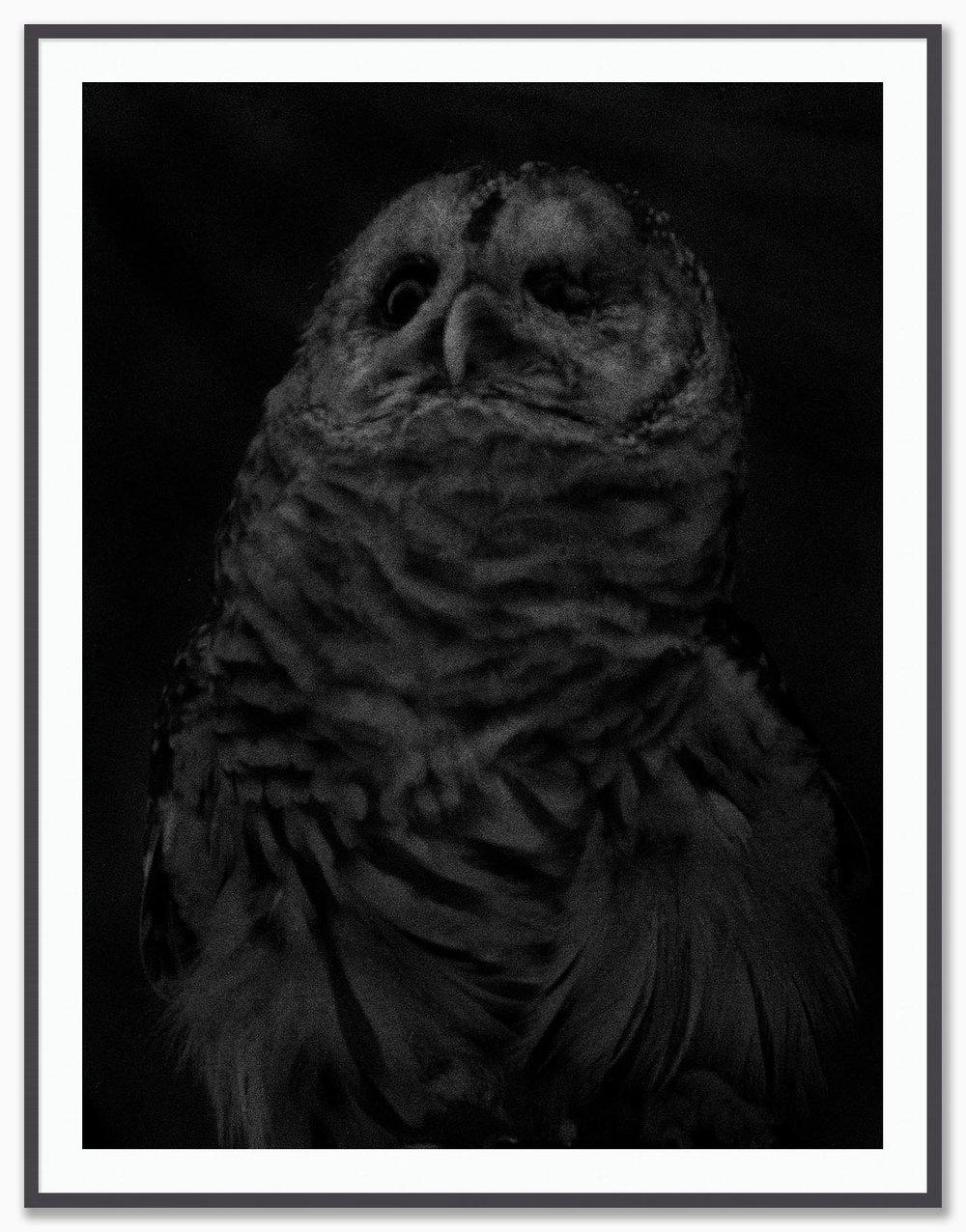 Owl_Mat_Dusk.jpg