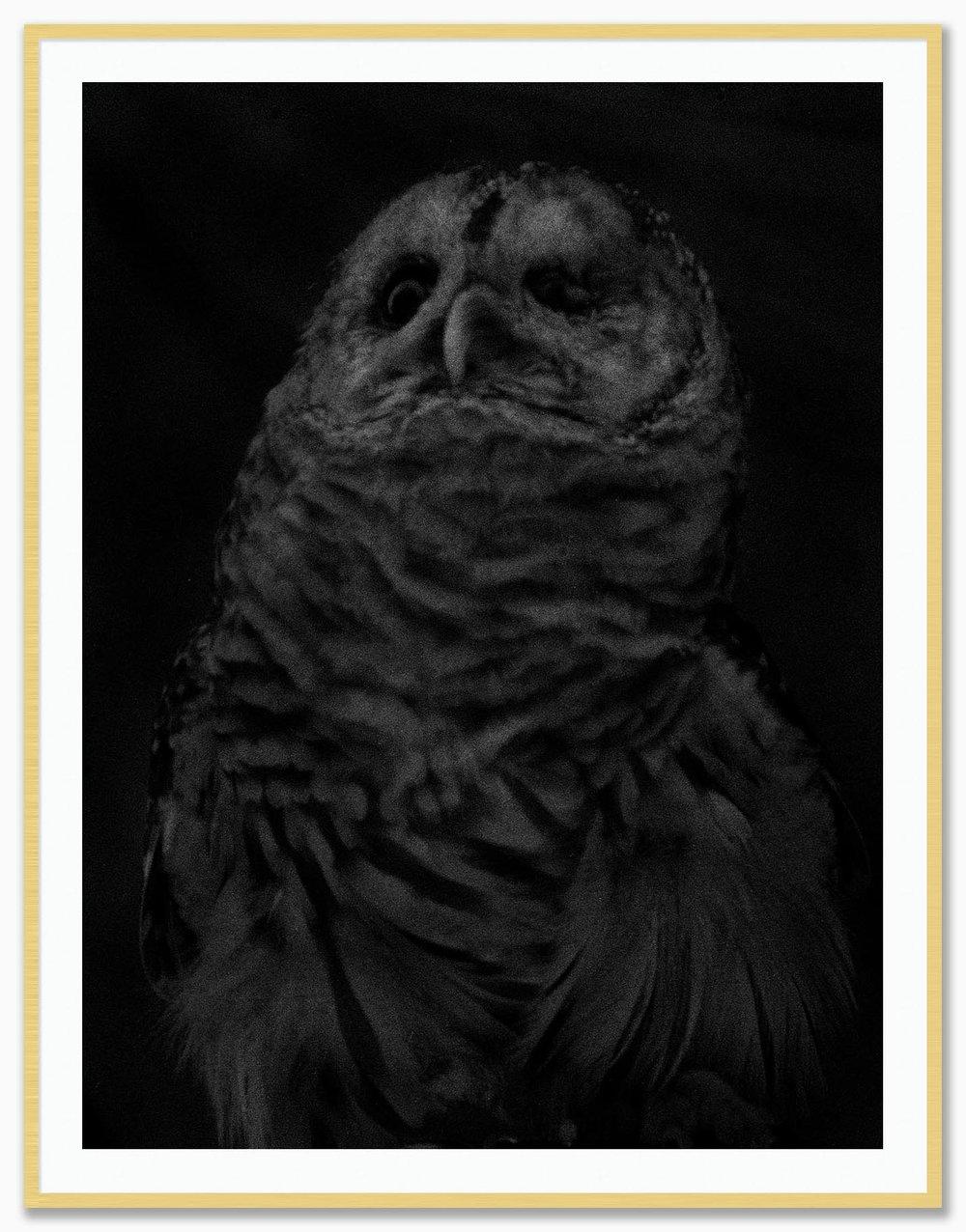 Owl_Mat_Gold.jpg