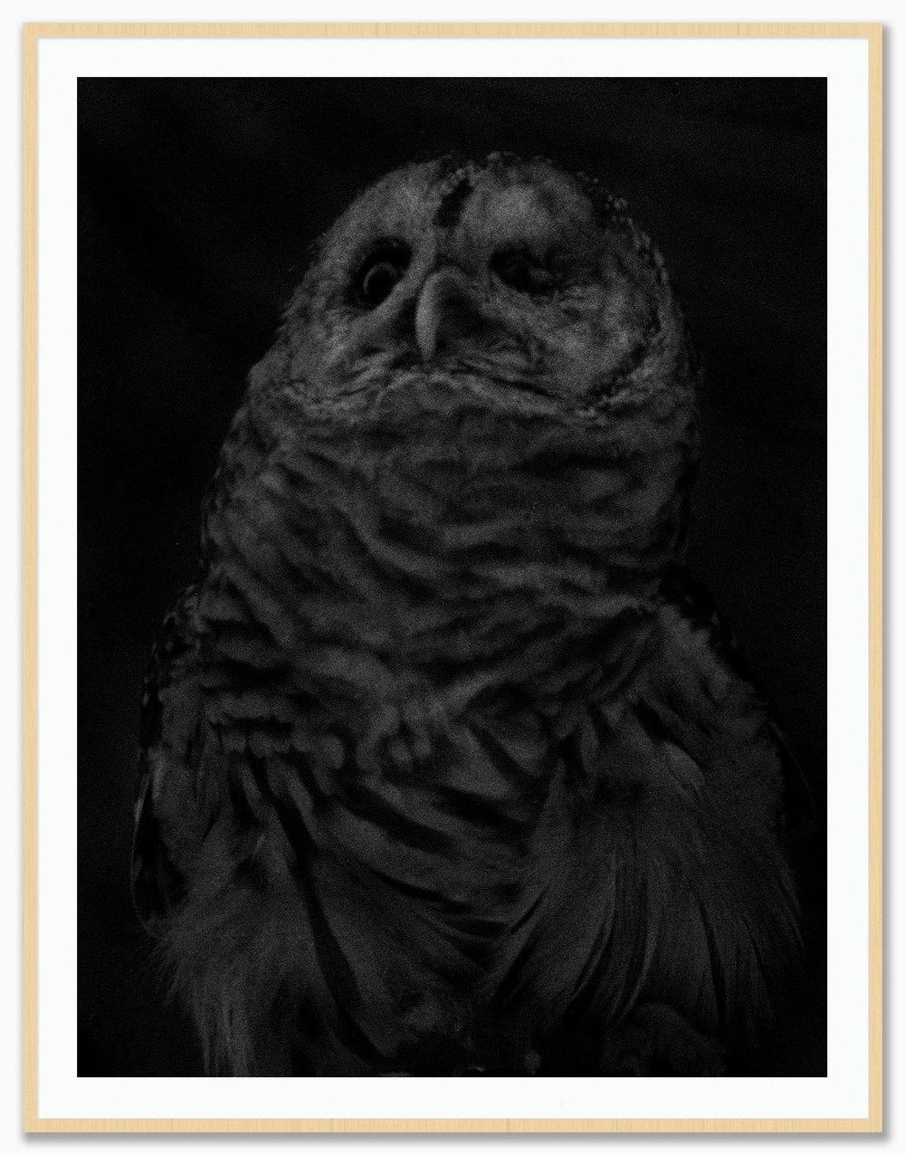 Owl_Mat_Maple.jpg