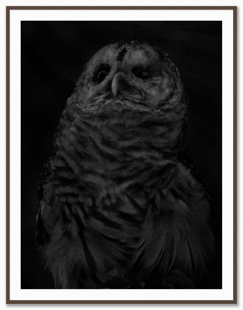 Owl_Mat_Walnut.jpg
