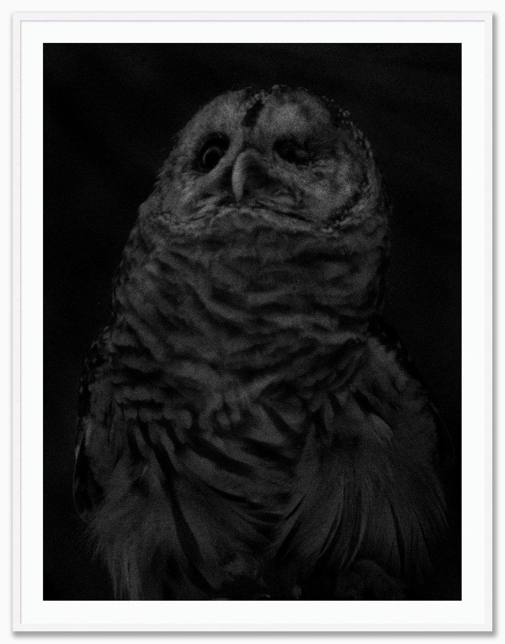 Owl_Mat_White.jpg