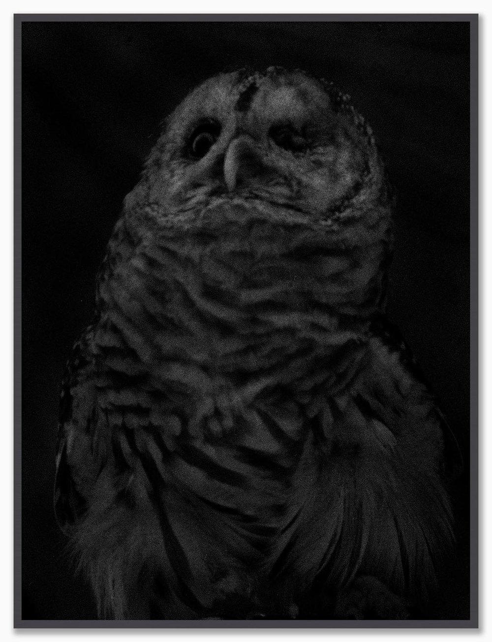 Owl_NoMat_Dusk.jpg