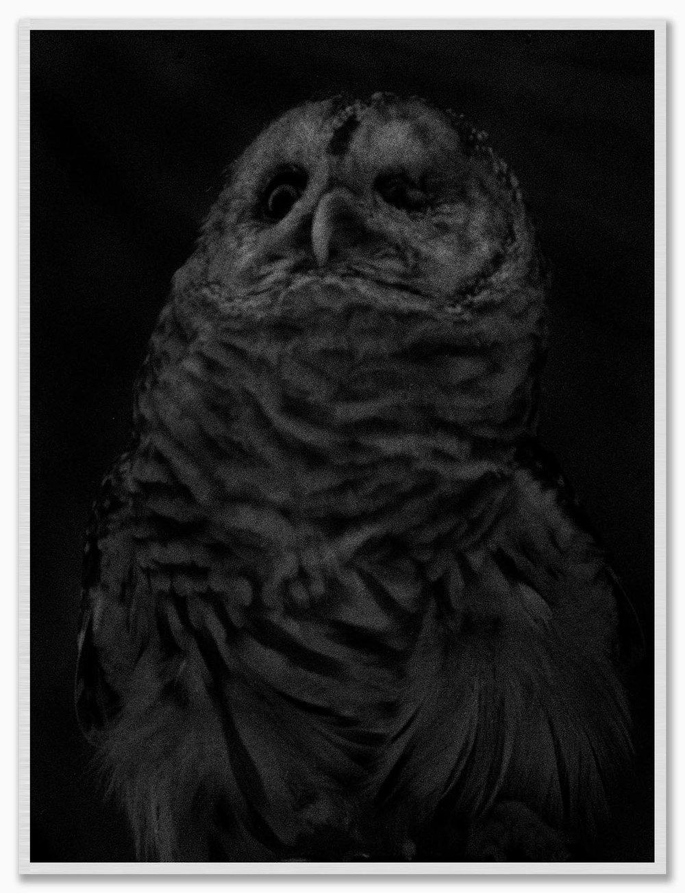 Owl_NoMat_FrostedSilver.jpg