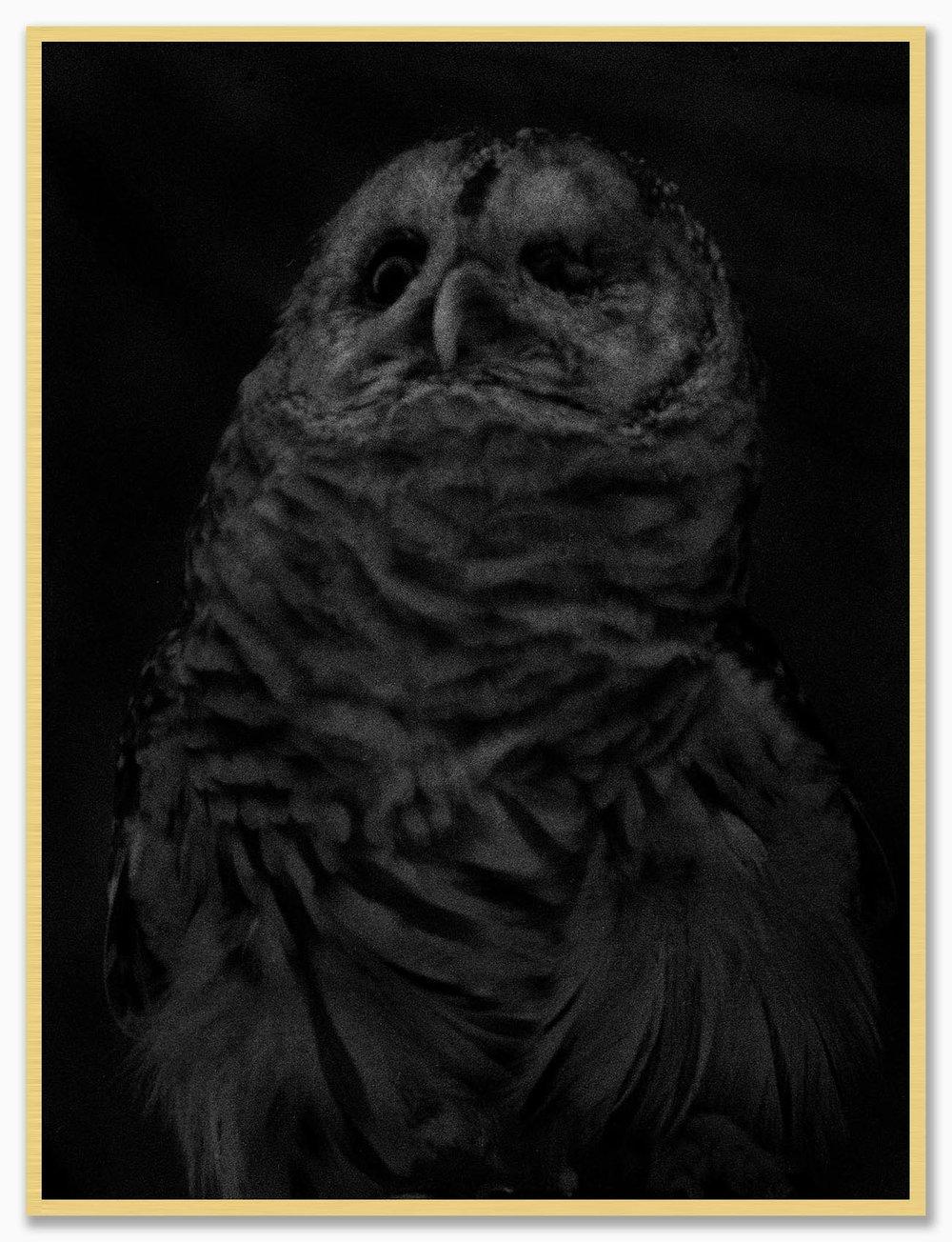 Owl_NoMat_Gold.jpg