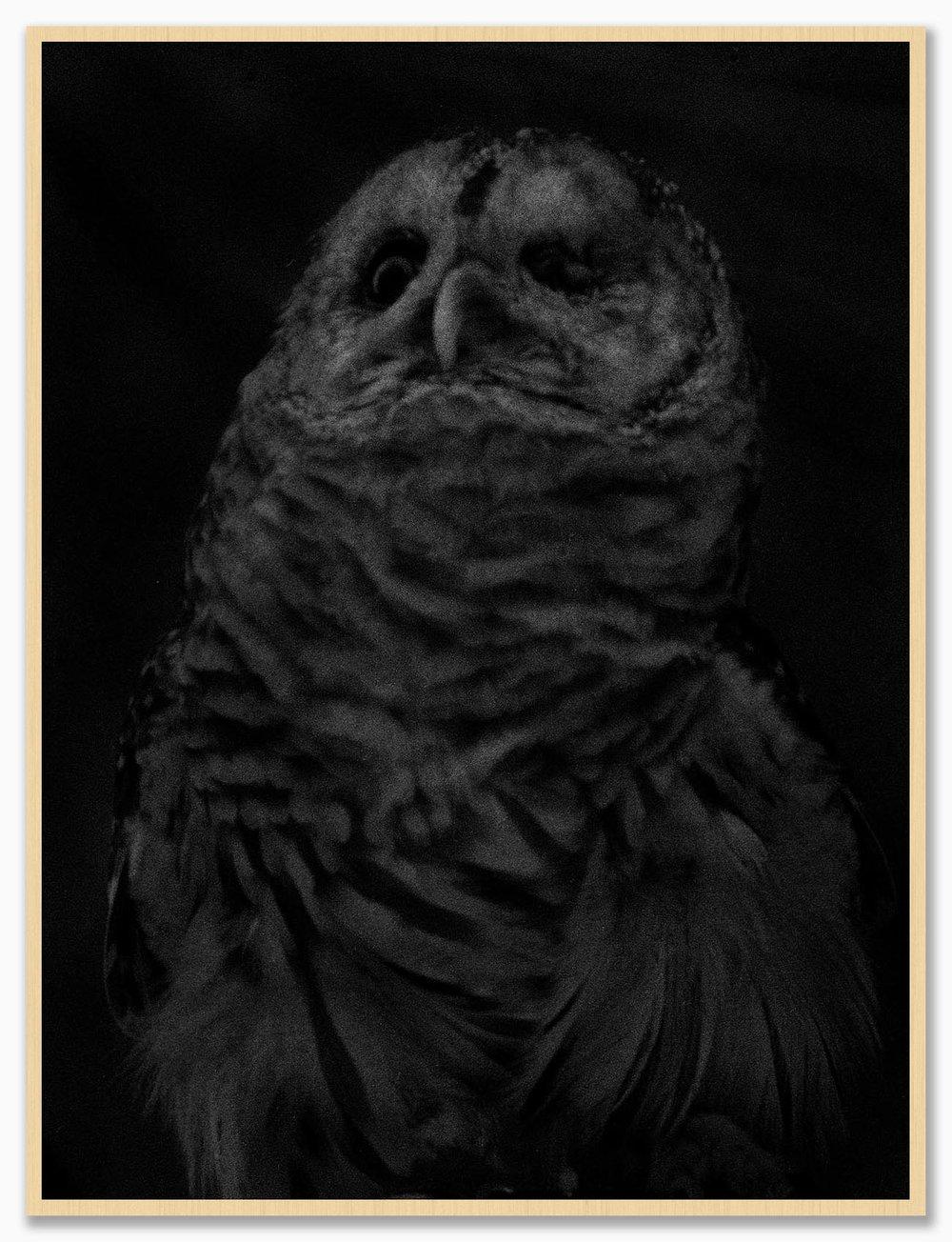 Owl_NoMat_Maple.jpg