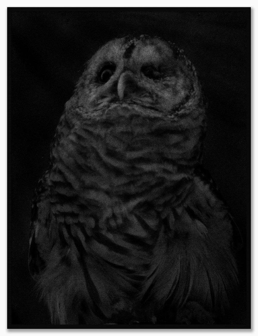 Owl_NoMat_MatteBlack.jpg
