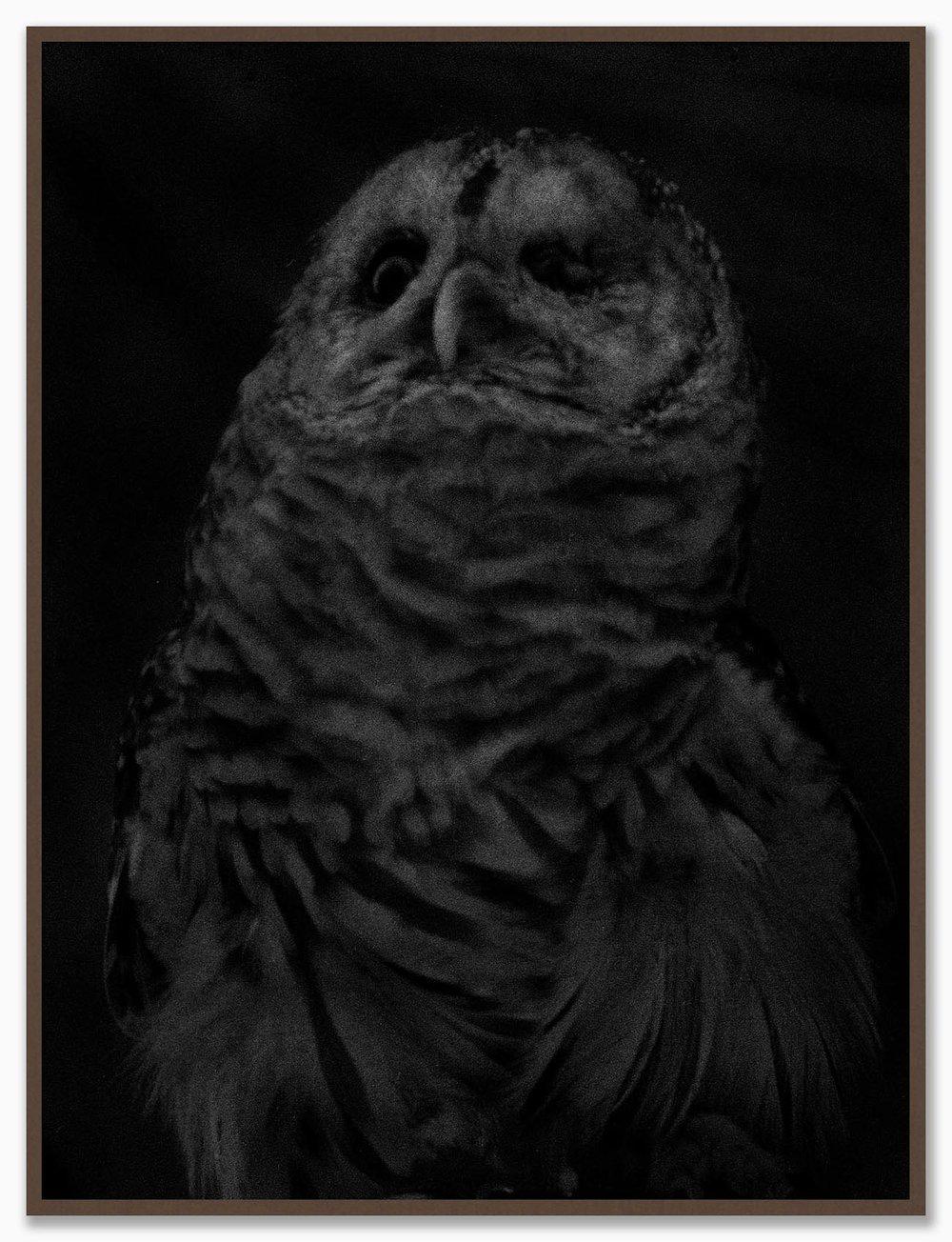 Owl_NoMat_Walnut.jpg
