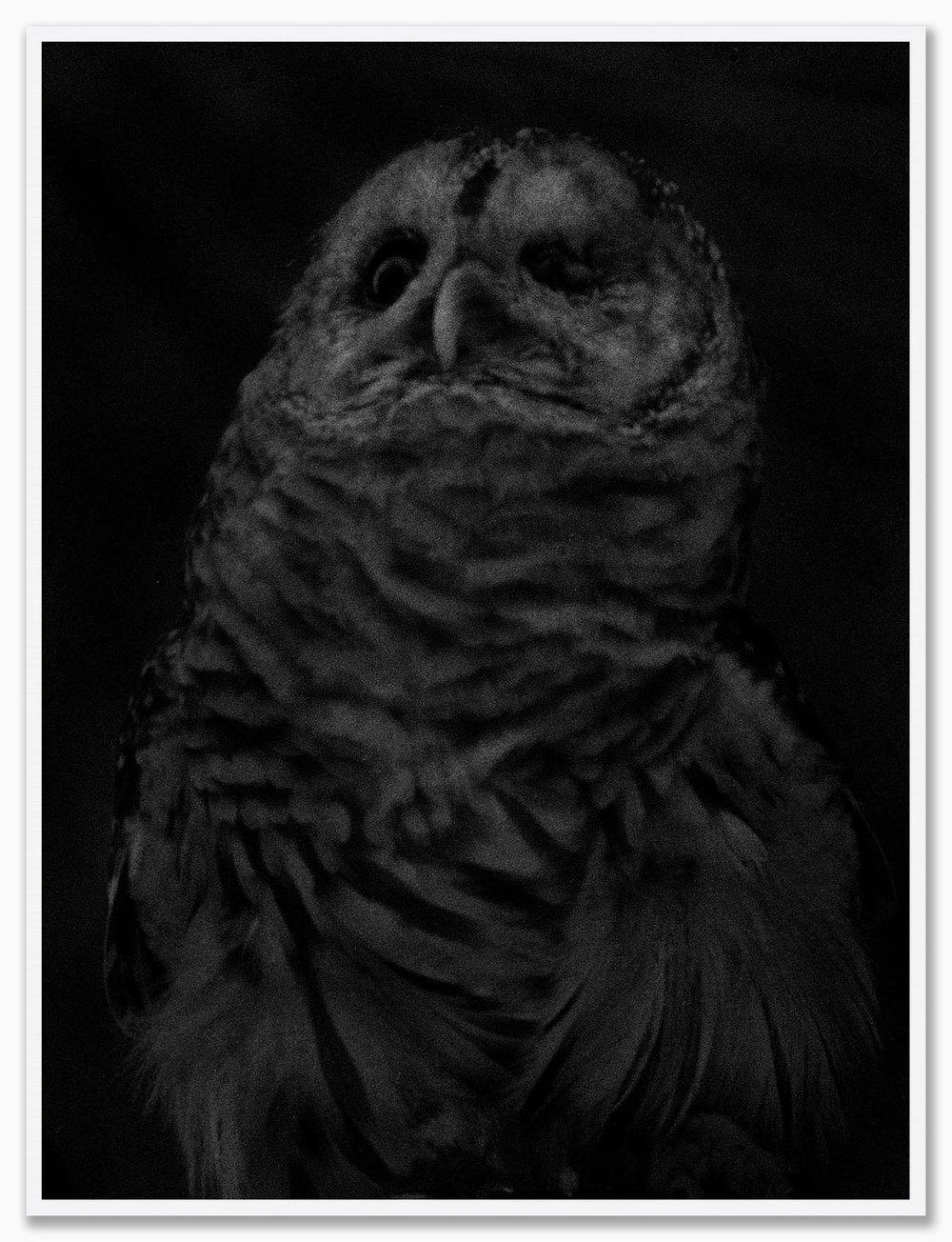 Owl_NoMat_White.jpg