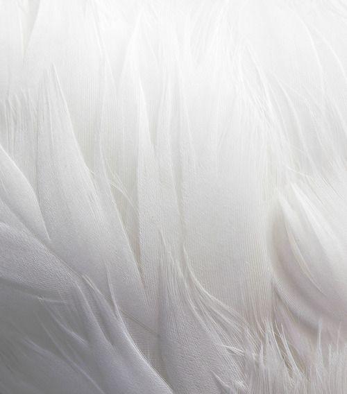 ailes2.jpg