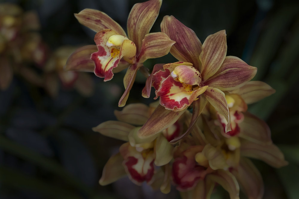 red yellow orchids.jpg