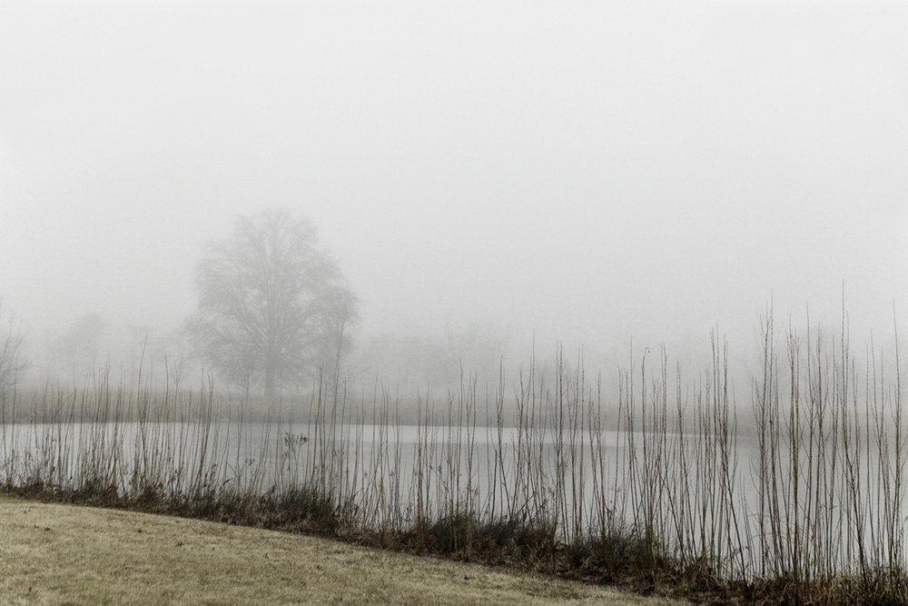 misty 2.jpg