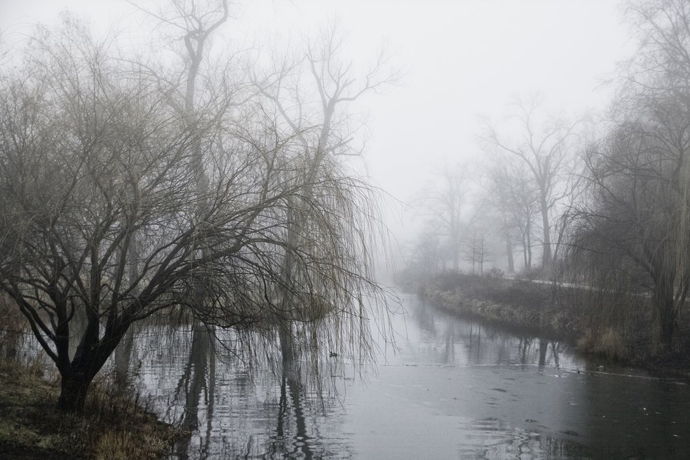 """morning fog"""