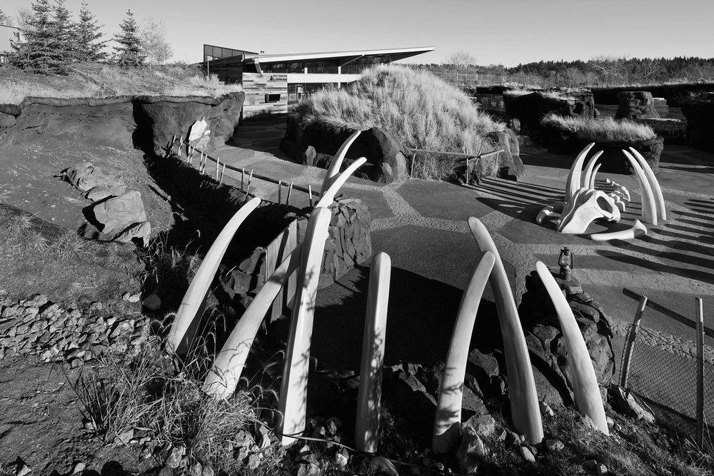 2012_093_Arctic_Shores-2684-b&w.jpg