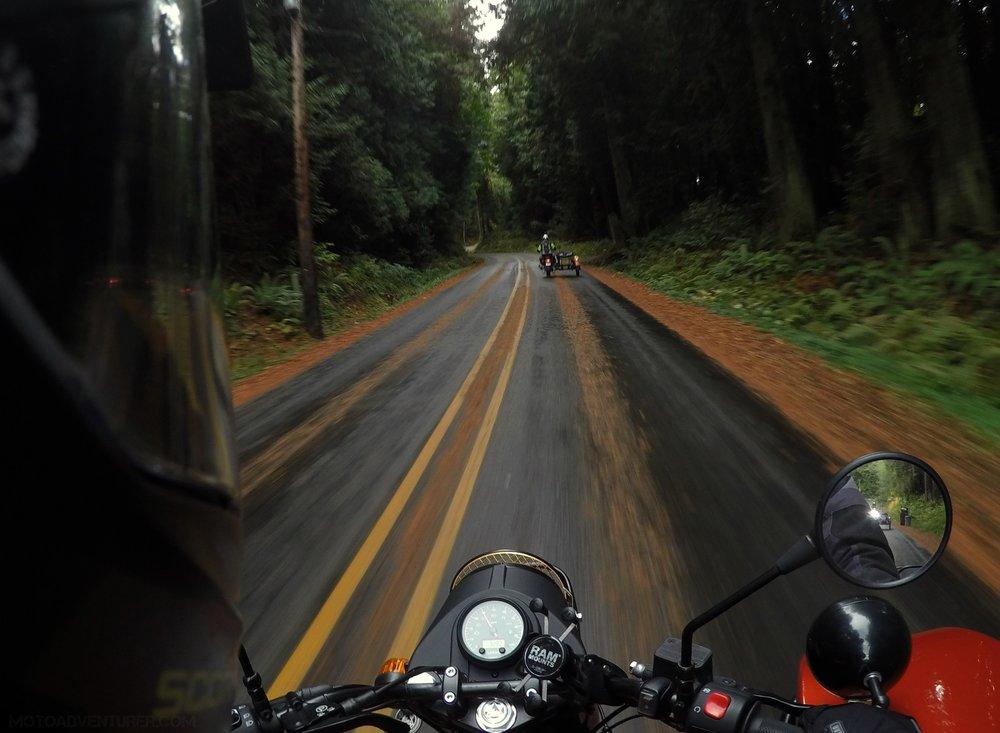 ural-gear-up-pine-needles-motoadvr.jpg