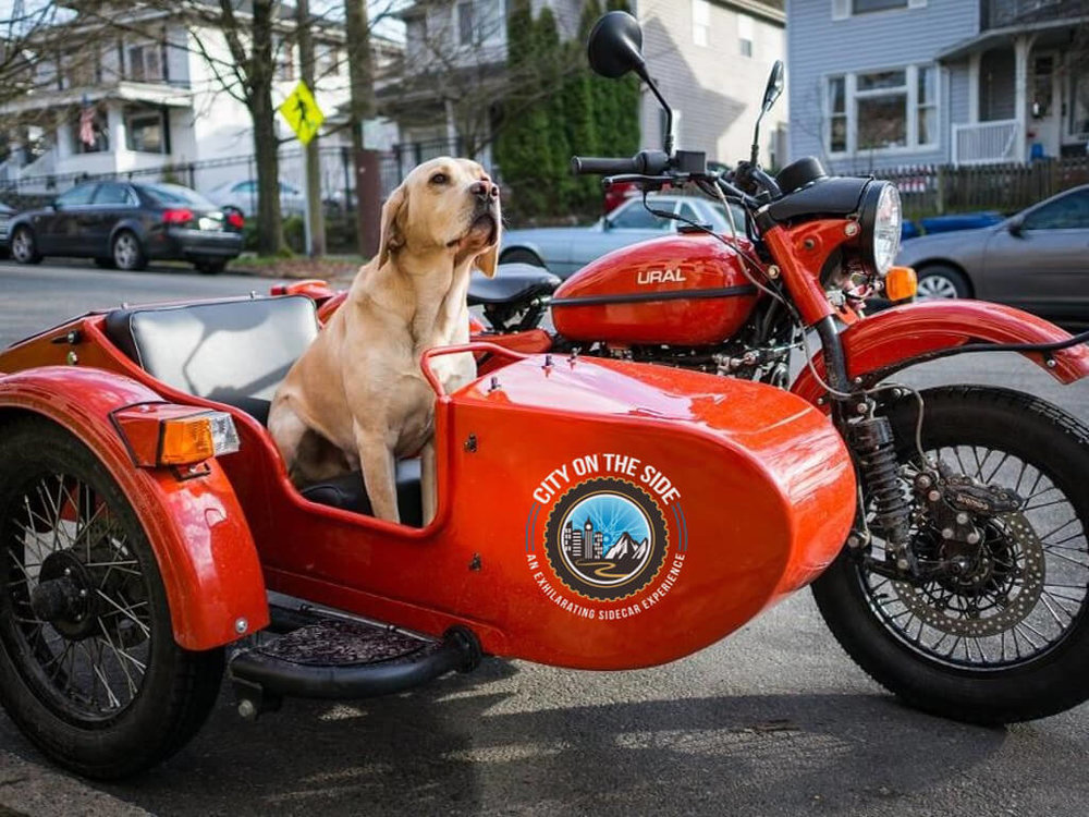 dog-in-motorcycle-sidecar.jpg