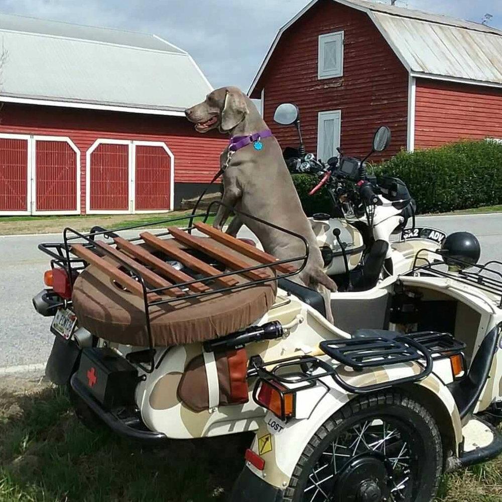 @sasha_motorcycle_adventure_dog