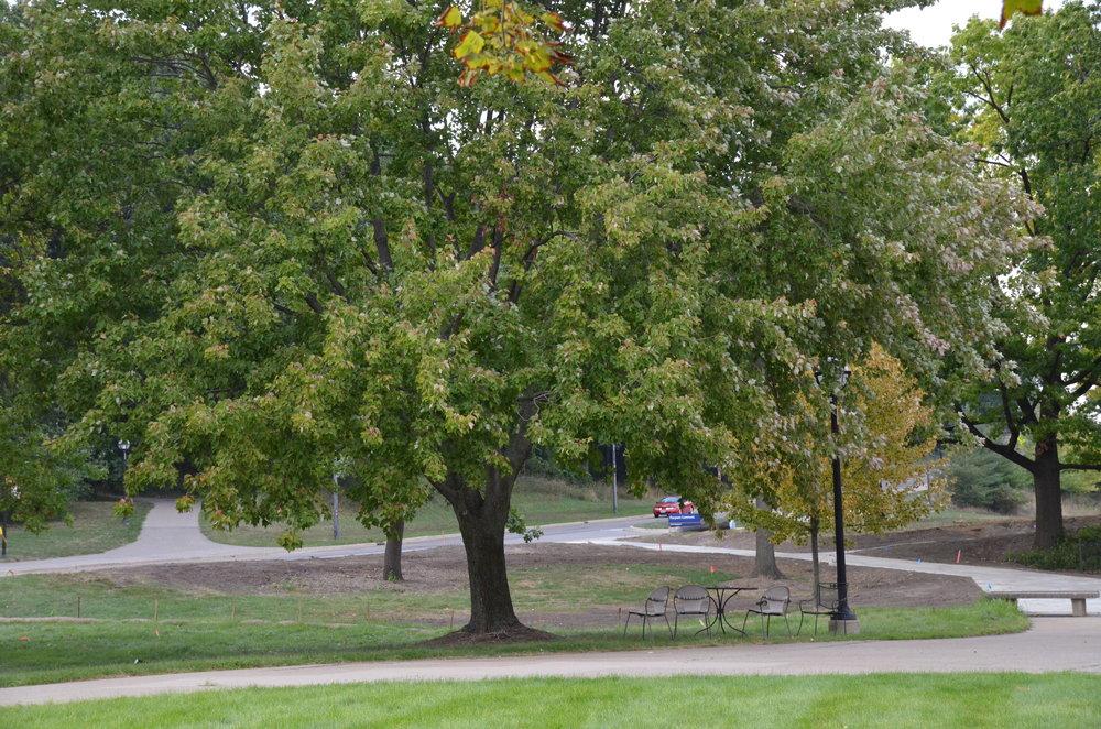 Tree in Umich.jpg
