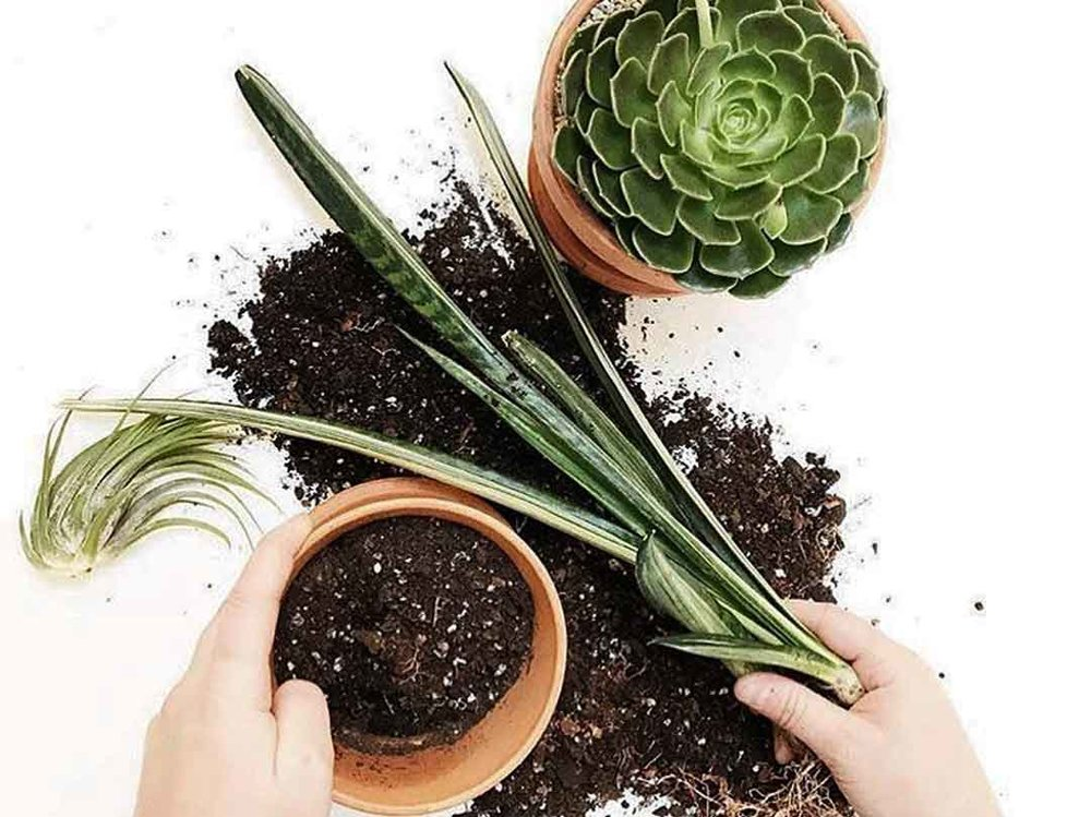 let's get dirty - Whether you have a single plant, or an expertly curated jungle, giving your plants what they need to thrive is an ongoing effort.We aim to provide support for all levels of plant ownership by offering instruction through in-store Plant Care Consultations, workshops and events.