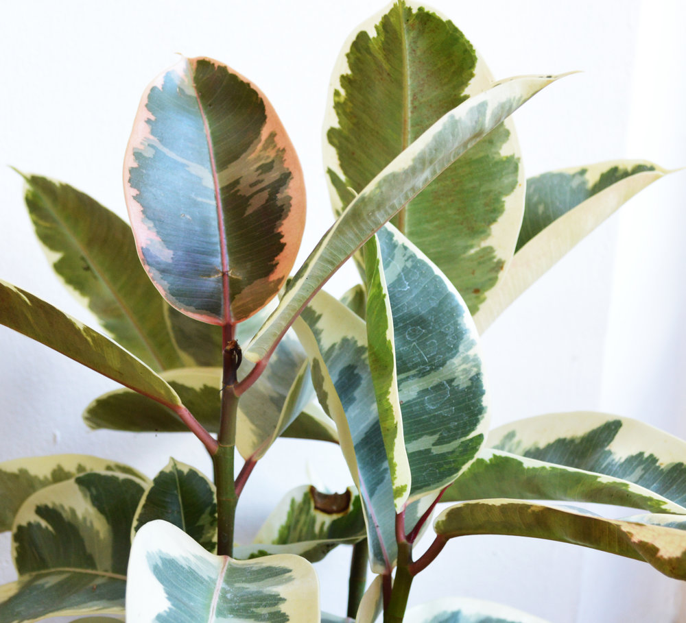 PLANT PEOPLE - Whether you're amassing an indoor jungle or shopping for your first houseplant, we are here to help. Our staff is passionate about helping you find plants that will enliven your space and bring you joy.