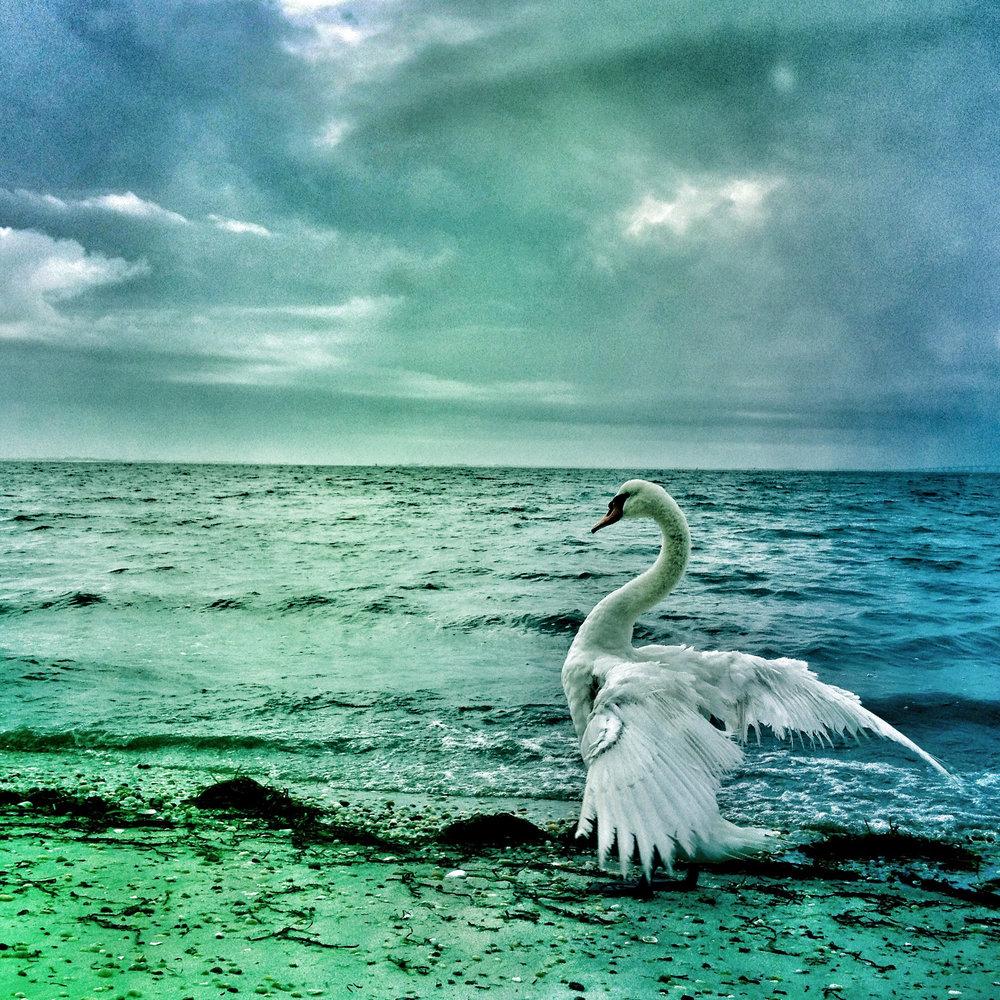 Swan's Crossing
