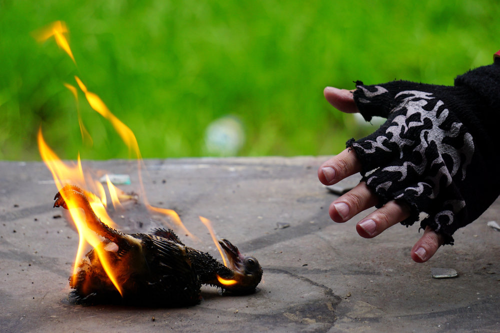 Five Finger Fowl Fire