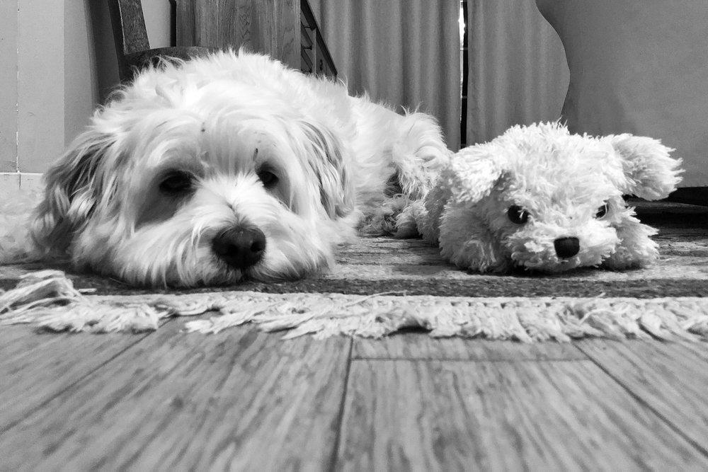 Alfie & Baby
