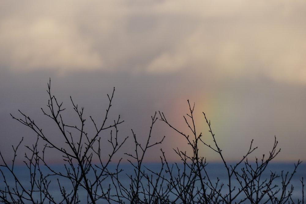 Rainbow 37