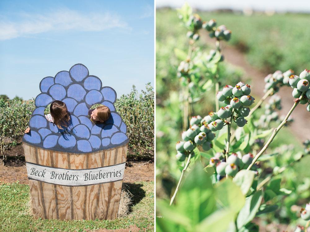 Beck Brothers Blueberries .jpg