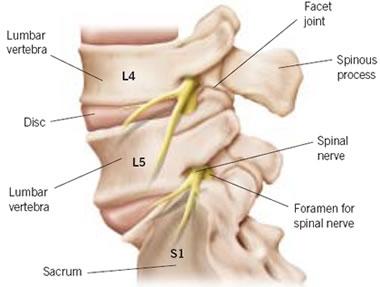 chiropractor carlsbad lumbar vertebra
