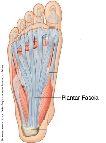 Select Chiropractic And Wellness Plantar Fasciitis
