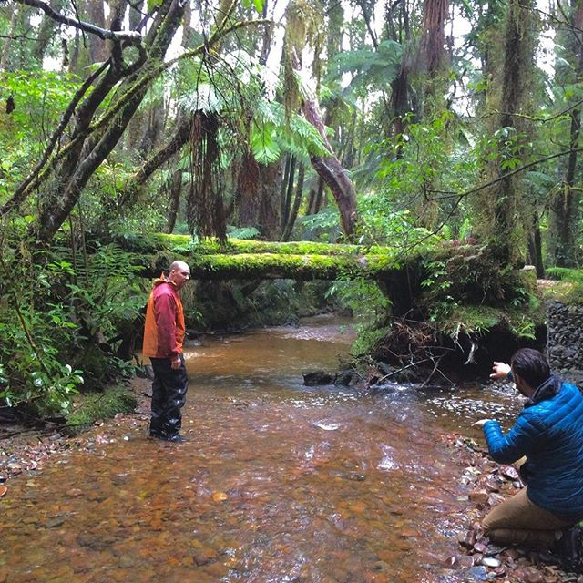 'Can you follow someone under that log with your #inspire2 #drone?' #filmscout #westcoastnz @daniellusko