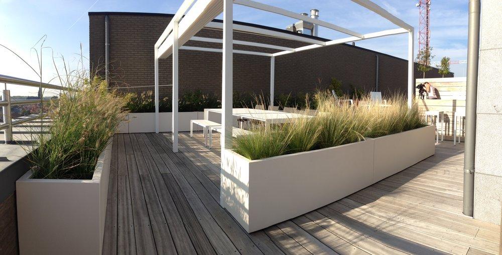 Myproject | dakterras plantenbakken siergrassen.jpg