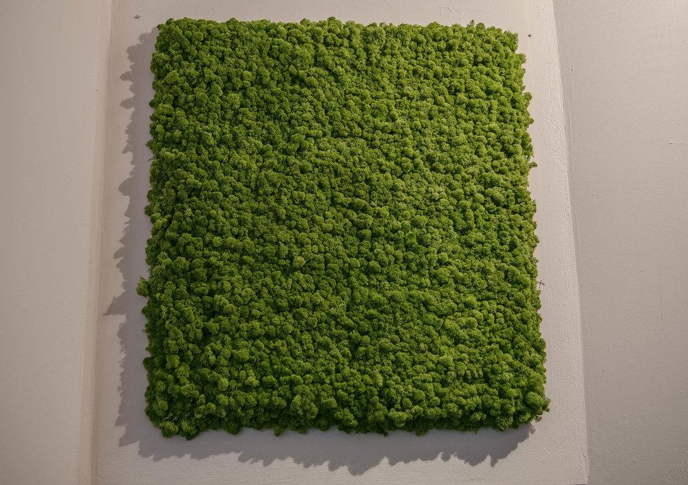 Moss lr.jpg