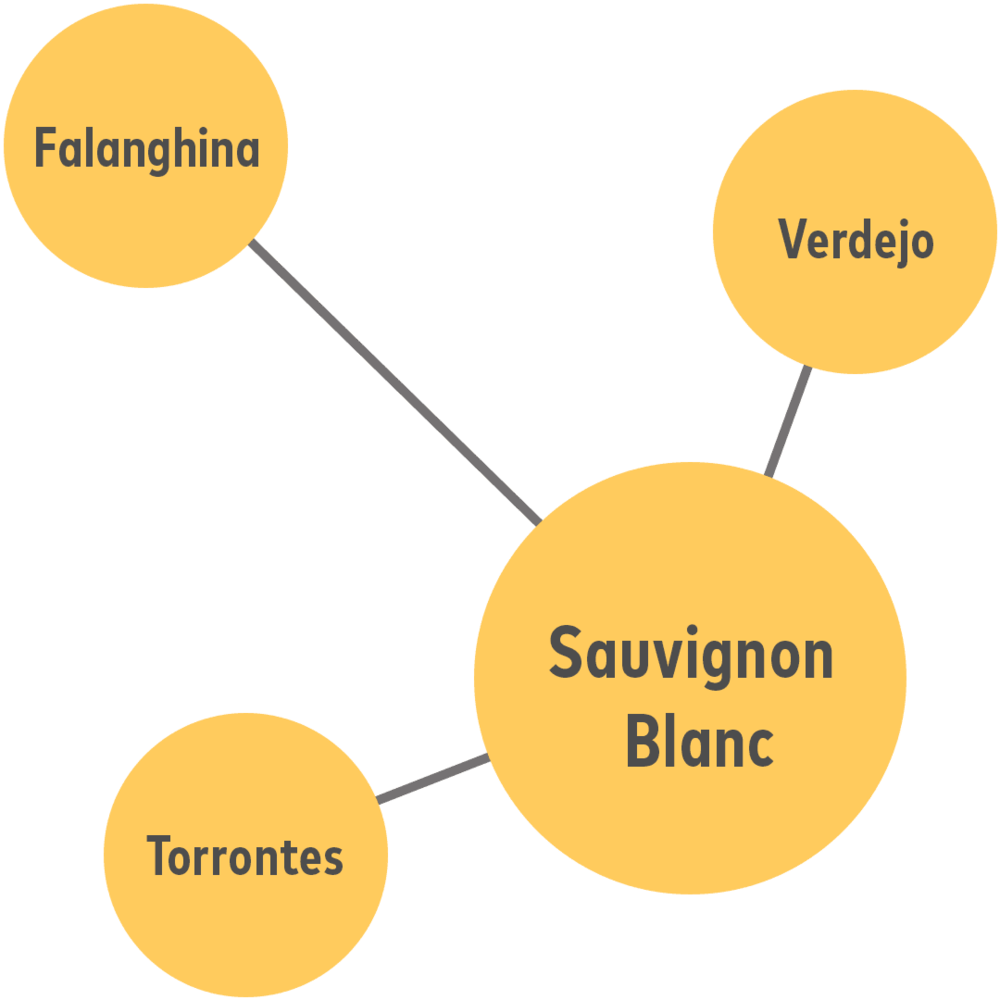 - If you like Sauvignon Blanc, you'll also like…Verdejo (from Spain)Falanghina (from Southern Italy)Torrontes (from Argentina)