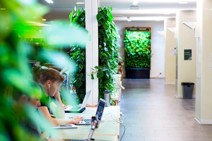 Naava-Green-Wall-School-889x592.jpg